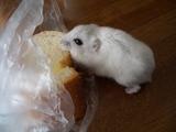 ガーリックのフランスパン