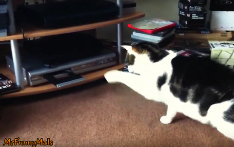 cats-vs-dvd-players