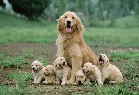Dog-family-photos-001