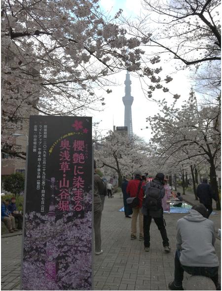 桜橋花祭り