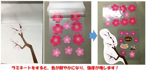桜ラミネート