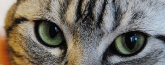 ネコ目 猫目 メイク