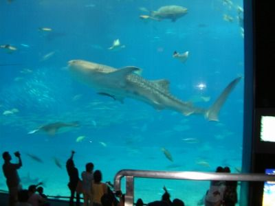 沖縄美ら海水族館6