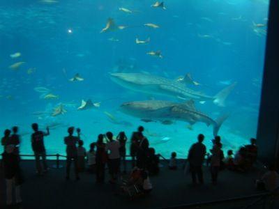 沖縄美ら海水族館2