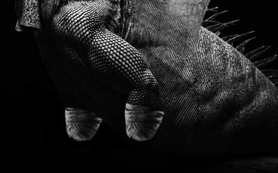 両手両足がないドラゴン