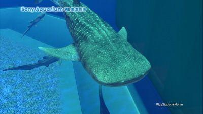VR沖縄美ら海水族館05