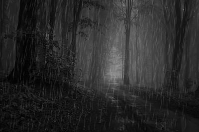 雨が降る林道