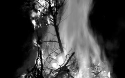 街路樹の火