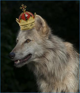 万物の霊長「狼」