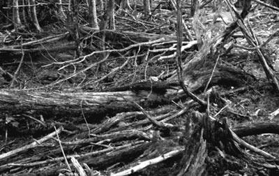 夜の森倒木