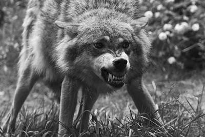 動物は生き残るために怒る