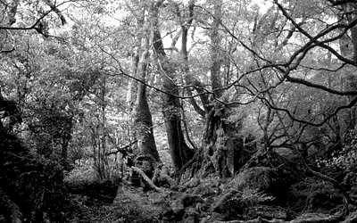 着地した森