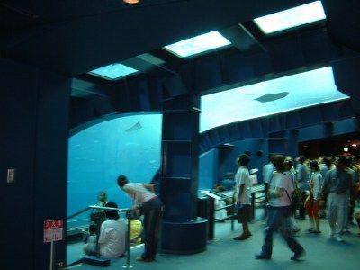 (比較)沖縄美ら海水族館a