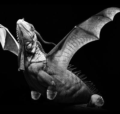 スモールホワイトドラゴン