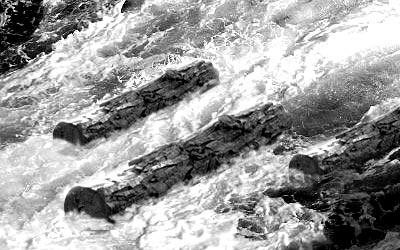 流れる木材