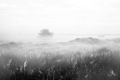 霧と濡れた平原