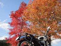 autumn leaves 04