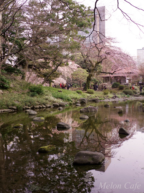 小石川後楽園の桜201702