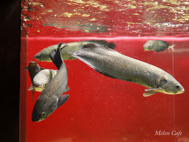 川崎水族館カワスイ20200717011