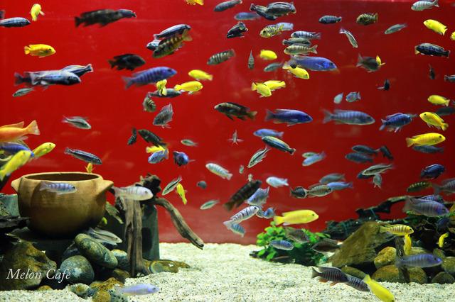 川崎水族館カワスイ20200717009