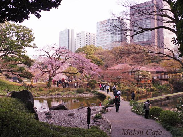 小石川後楽園の桜201712