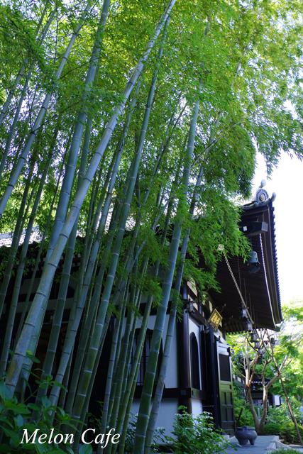 鎌倉のあじさい散策と江ノ電03
