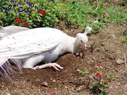 野毛山動物園その8