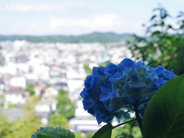 鎌倉のあじさい散策と江ノ電06