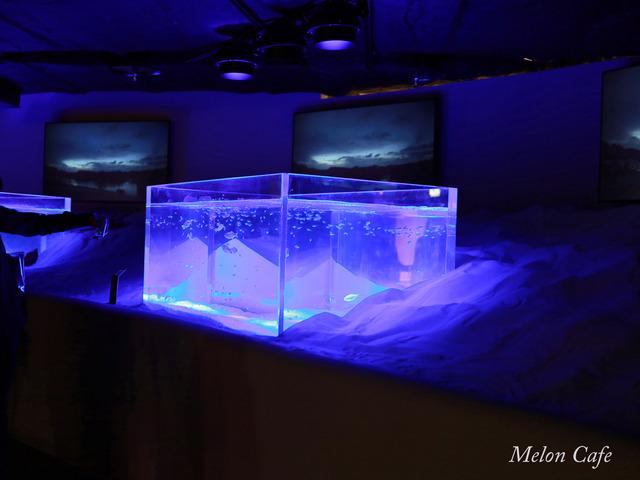 川崎水族館カワスイ20200717019