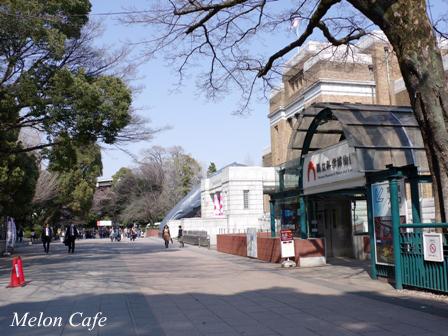 ドールスムージーモニターと上野公園の桜風景08