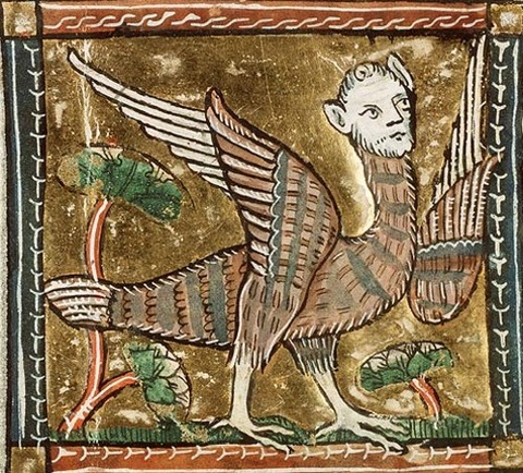 Medieval art of a harpy 1350