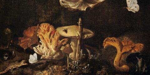 Mushrooms Butterflies Otto Marseus van Schrieck 1619-78 -