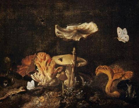 Mushrooms Butterflies Otto Marseus van Schrieck 1619-78