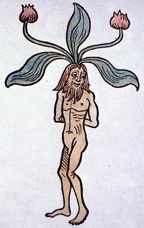 Hortus sanitatis, Mainz, 1491