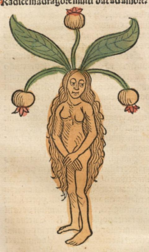 Hortus Sanitatis, 1491