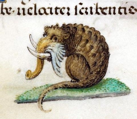 England and Medieval manuscript 14