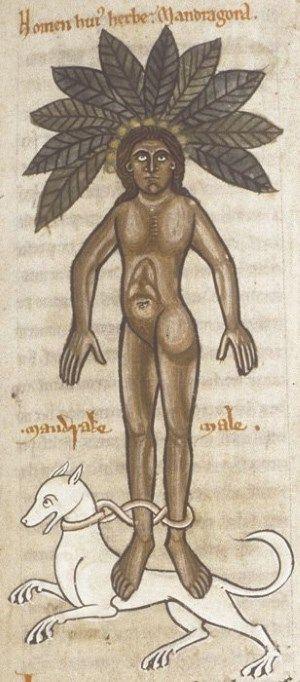Ashmole 1462