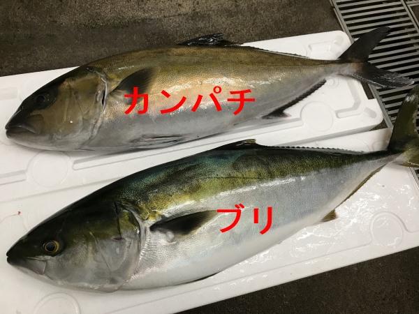 kanpachi_buri
