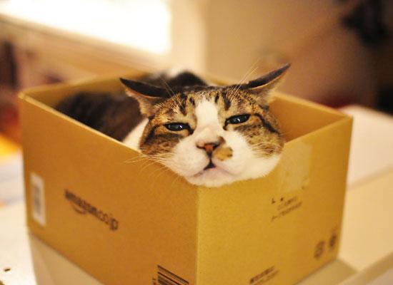 箱の中身はあなた様のご飯でしたのよ