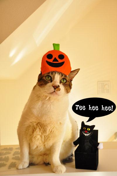 ふたを開けるとネコが飛び出して鳴くんですよこれ。