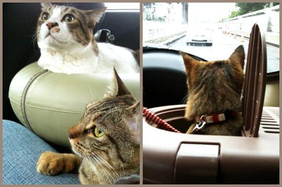 前日よりかは車中で落ち着いていたうーちゃん