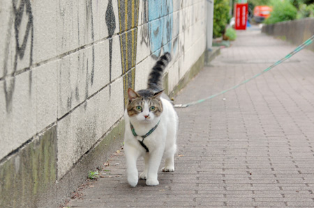 巨猫キターーー!
