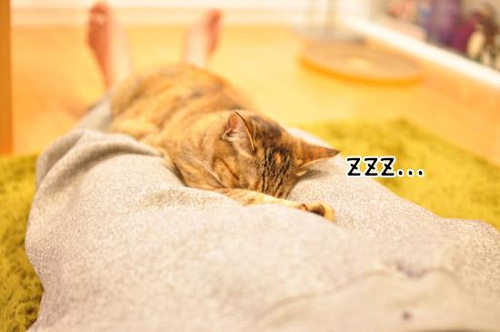 おやすみー。