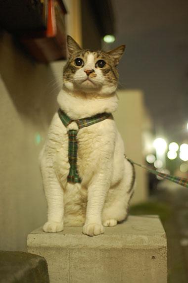 相方さんの大好きな忠猫ポーズ。