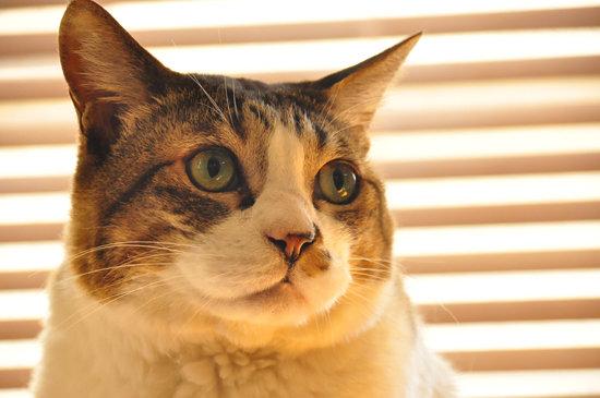 猫又目指すわ〜。
