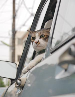 めんまドライバー?