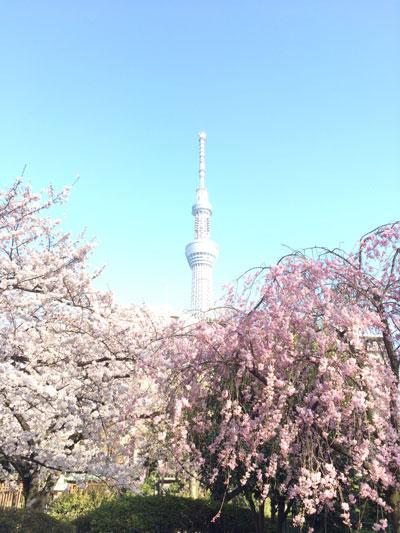 満開の桜をギリギリ見られてよかった^^