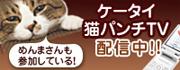 「ケータイ猫パンチTV」詳細へ