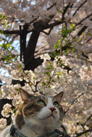 こうしてお花見させて頂けてありがたいですね〜。