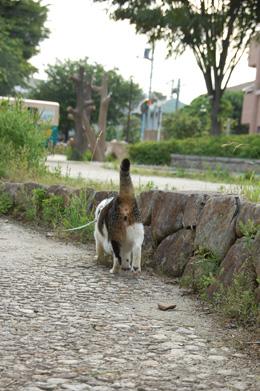 歩くの早ーい!